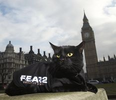 black cat Fear 2
